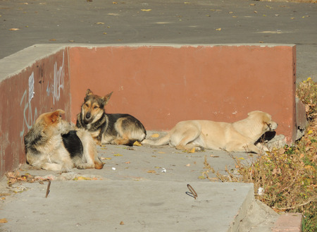 solarize: dogs taking autumnal sunbath in the quiet nook of street
