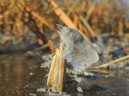 reed stem: Ice and crystals on the stem of the common reed (Phragmites)