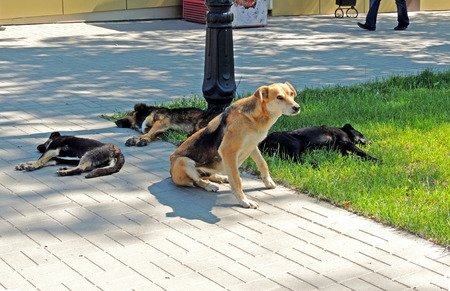grass plot: Mixedbreed dogs resting on a pavement and grass plot on a hot day Stock Photo