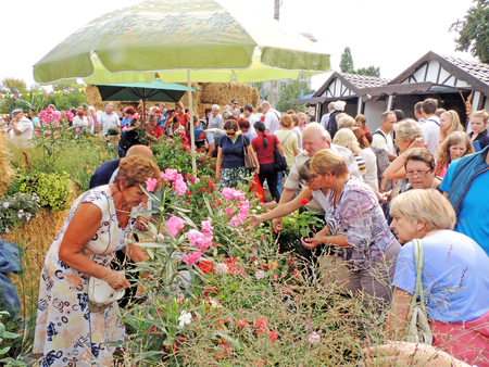 community people: Townsfolk choose flowers for planting on the city square during the international exhibition-fair Voronezh - Garden City