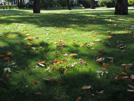 plot: Dead leaves on the grass plot in the park