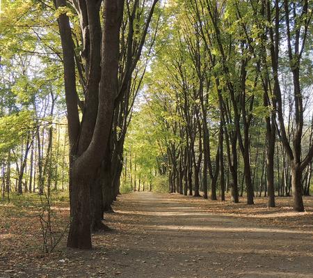 lane: Autumnal park lane