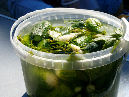 Feshly-salted cucumbers with garlic, dill, currant leaf in a plastic container