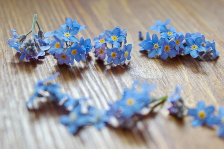forget: forget me nots lying on the table