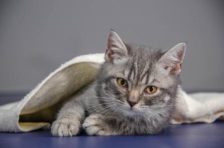 treatment kitten