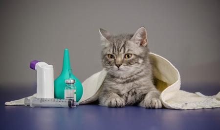 kotów: mały kotek jest chory leczenie kotek Zdjęcie Seryjne