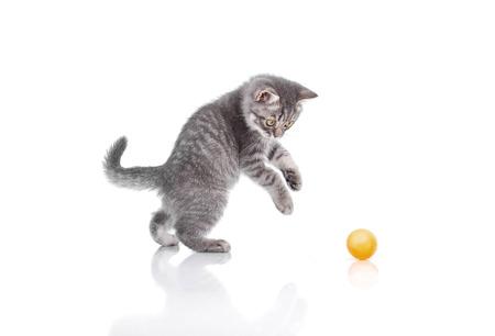 Funny little kitten Archivio Fotografico