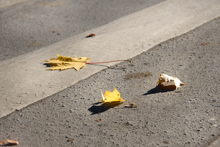 Autumn yellow leaves on the pavement in the city Stok Fotoğraf