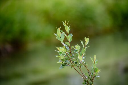 Tree branch with green leaves - blurred bokeh background