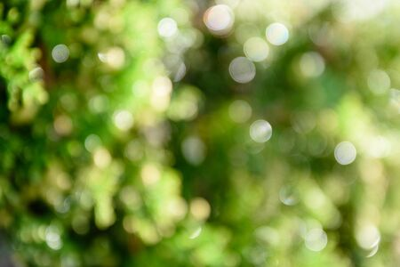 Bright green bokeh, natural background Stok Fotoğraf