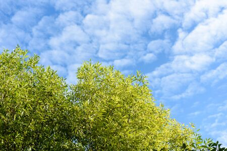 Branches of a tree with green leaves on a blue sky Stok Fotoğraf