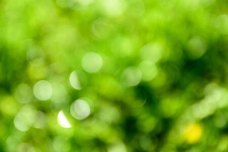 Bright green bokeh, natural background Stok Fotoğraf - 131884919