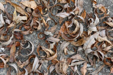Dry autumn leaves on the ground-background texture image Stok Fotoğraf