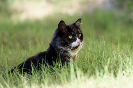 Big cat sitting in the green grass. Stok Fotoğraf