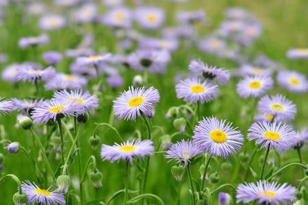 growing group of wildflowers Stock Photo