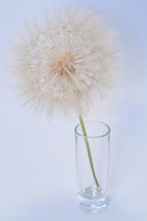dandelion flower in a glass Stock Photo