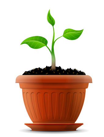 breeding ground: Sprout with leaves in flower pot  Growing plant in ground  Qualitative vector  EPS-10  illustration about growth, gardening, agriculture, flora, ecology, nature, etc