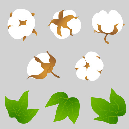 Set of cotton plant elements  Different foreshortening of cotton bolls and leaves.  Qualitative vector elements for textile industry, cotton manufacturing, fabric, yarn production, clothing, etc. Vector