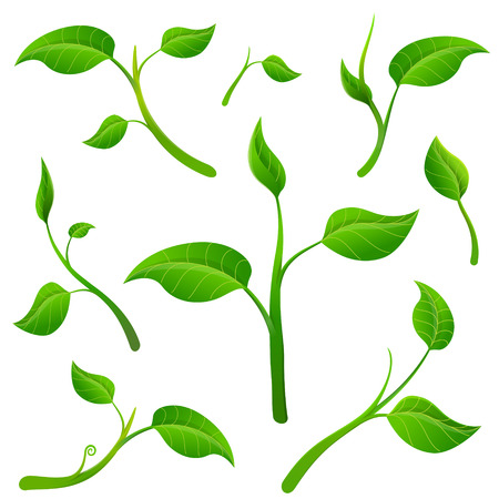 Detached twigs with leaves.  Plant parts isolated on white background