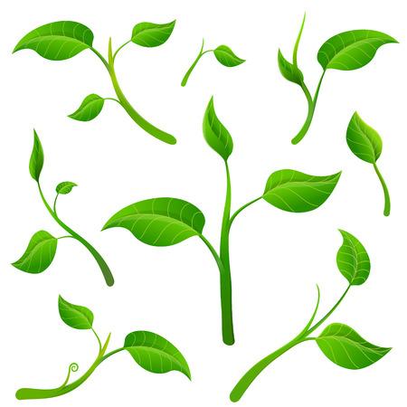 enten: Vrijstaande takjes met bladeren. Delen van de plant op een witte achtergrond Stock Illustratie