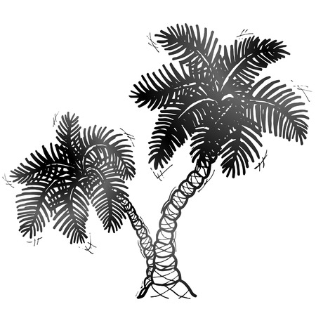 subtropics: Hand drawn palm tree.  Sketch of palm in doodle style