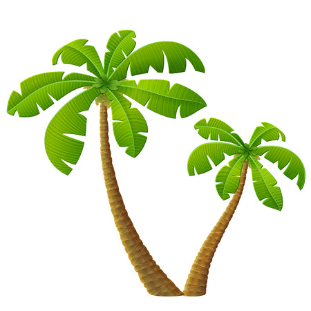coconut seedlings: Tropical palm tree with leaves. Group of beach plants. Qualitative vector illustration for travel concept southern nature resort tropical flora beach etc Illustration