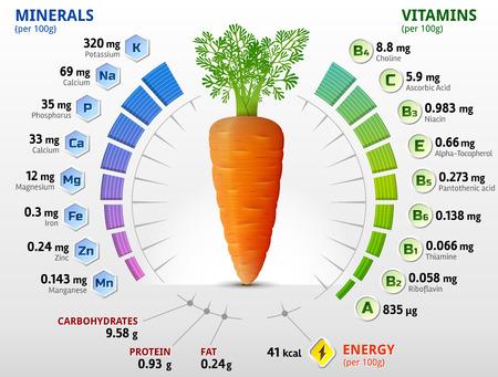Las vitaminas y los minerales de tubérculo zanahoria. Infografía sobre los nutrientes en la zanahoria. Ilustración vectorial cualitativa sobre las vitaminas verduras zanahoria salud nutrientes de los alimentos de dieta, etc.