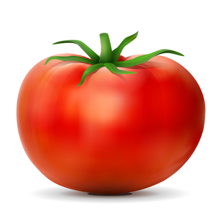 Tomato with leaves close up. Tomato fruit isolated on white background. Qualitative vector illustration for agriculture, vegetables, cooking, health food, gastronomy, olericulture, etc