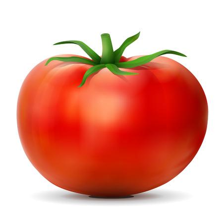 Tomate con hojas de cerca. Tomate frutas aisladas sobre fondo blanco. Ilustración vectorial cualitativa para la agricultura, las verduras, la cocina, la comida sana, la gastronomía, Olericultura, etc.