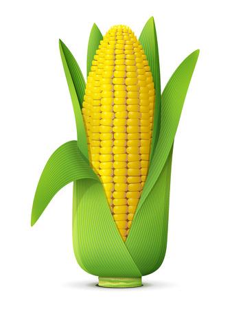 elote: Espiga de trigo con hojas de cerca. Mazorca de maíz aislado en el fondo blanco. Ilustración vectorial cualitativa para la agricultura, las verduras, la cocina, la comida sana, la gastronomía, Olericultura, etc.