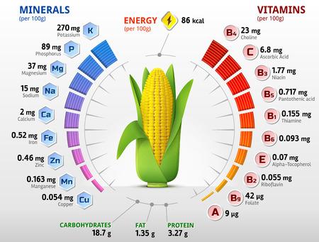 건강: 비타민과 옥수수 개 암 나무 열매의 미네랄. 옥수수의 귀에 영양소에 대한 인포 그래픽. 옥수수, 비타민, 야채, 건강 식품, 영양, 다이어트, 등에 대한 질적 벡터 일러