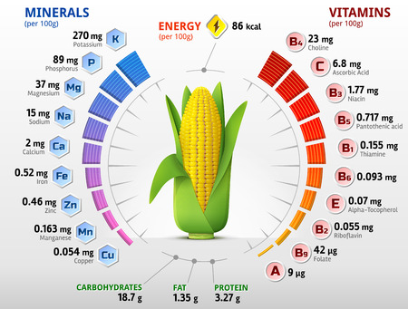 elote: Las vitaminas y los minerales de la mazorca de maíz. Infografía sobre los nutrientes en el oído del maíz. Ilustración vectorial cualitativa sobre maíz, vitaminas, verduras, alimentos saludables, nutrientes, dieta, etc.