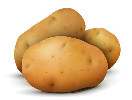 Heap of potato tubers close up. Root vegetable isolated on white background. Qualitative vector illustration for agriculture, vegetables, cooking, health food, gastronomy, olericulture, etc