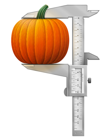 caliper: Vertical caliper measures pumpkin fruit. Concept of winter squash and measuring tool. Qualitative vector illustration for agriculture, vegetables, cooking, halloween, gastronomy, thanksgiving, olericulture, etc