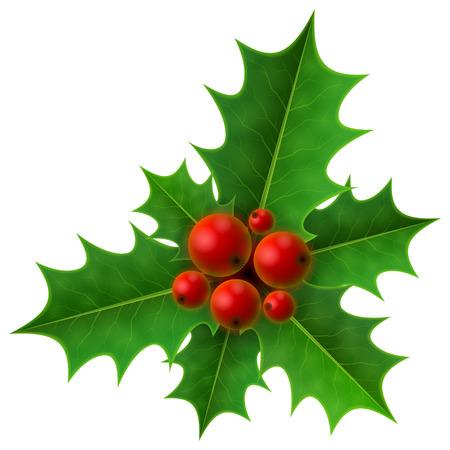 hojas parra: Navidad Holly Berry aislado en fondo blanco. Acebo frutas montón de hojas. Ilustración vectorial cualitativa para la Navidad, día de año nuevo, la decoración, vacaciones de invierno, el diseño, la noche vieja, plantas, etc. Vectores