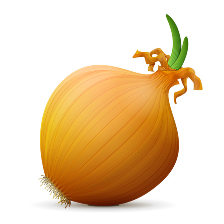 Common onion with small leaves close up. Shallot bulb isolated on white background. Qualitative vector illustration for agriculture, food service, cooking, gastronomy, olericulture, etc Illustration