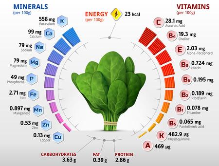 nutrientes: Las vitaminas y los minerales de las hojas de espinaca. Infografía sobre los nutrientes en la espinaca verde. ilustración vectorial cualitativa sobre las espinacas, vitaminas, verduras, comida sana, dieta, nutrientes, etc.