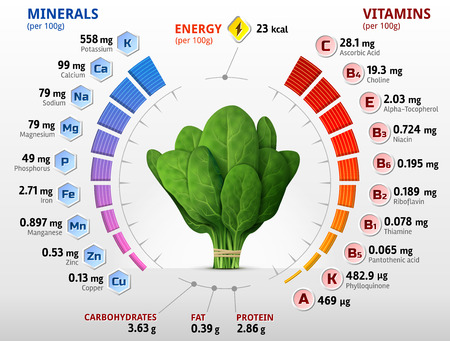 Vitamins and minerals of spinach leaves. Infographics about nutrients in green spinach. Qualitative vector illustration about spinach, vitamins, vegetables, health food, nutrients, diet, etc Ilustração