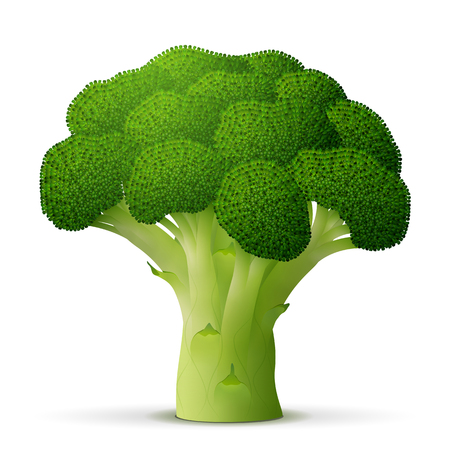 healthful: Green flower head of broccoli close up. Broccoli cabbage sprout isolated on white background. Qualitative illustration for agriculture, food service, cooking, gastronomy, olericulture, etc