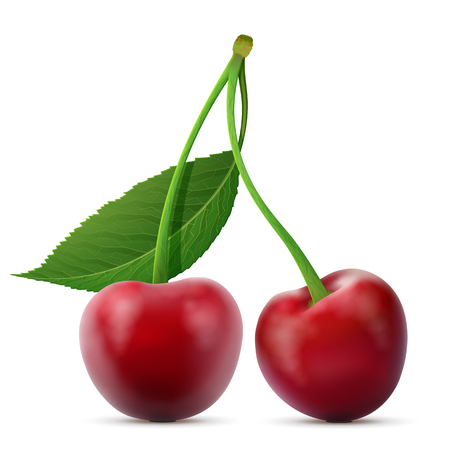 cherries isolated: Pair of cherries fruits close up. Cherry with leaf isolated on white background. Qualitative illustration about cherry, agriculture, fruits, cooking, gastronomy, etc