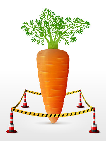 quarantine: Carrot tuber located in restricted area. Carrot with leaves surrounded barrier tape. Qualitative illustration for agriculture, vegetables, cooking, gastronomy, olericulture, etc Illustration