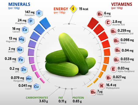 biochemistry: Vitamins and minerals of cucumber fruit. Infographics about nutrients in cuke with peel. Qualitative vector image for cucumber, agriculture, veggies, cooking, farming, gastronomy, olericulture, etc