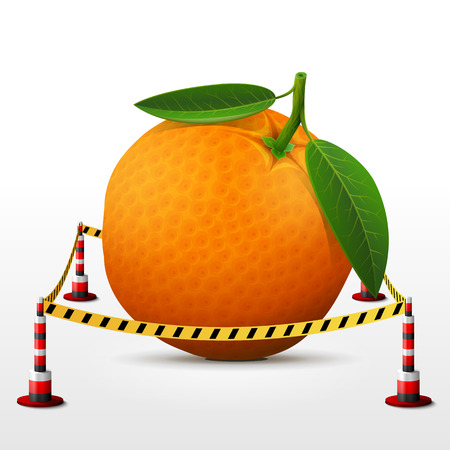 quarantine: Orange fruit located in restricted area. Orange with leaves surrounded barrier tape. Qualitative  illustration about orange, agriculture, fruits, cooking, farming, gastronomy, gardening, etc