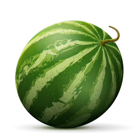 Single watermelon fruit close up. Raw melon isolated on white background. Qualitative vector illustration about watermelon, agriculture, fruits, cooking, food, gastronomy, etc