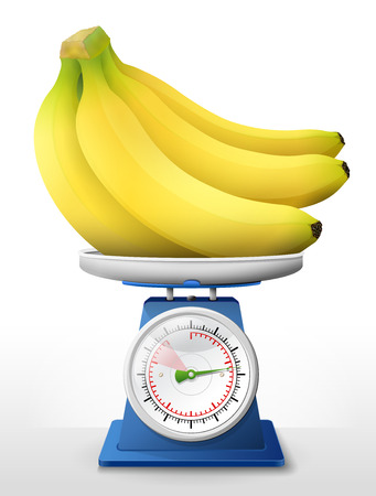 Banana fruit on scale pan. Weighing bunch of bananas on scales. Qualitative vector illustration about agriculture, fruits, cooking, health food, gastronomy, botany, etc