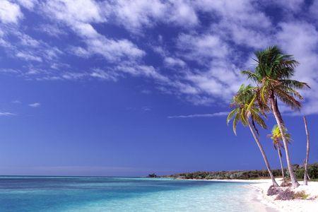 Pulm trees on Caribbean coastwise