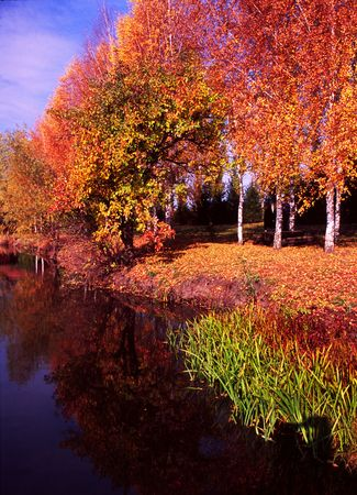 Bank of the river in autumn. Magic of nature colors