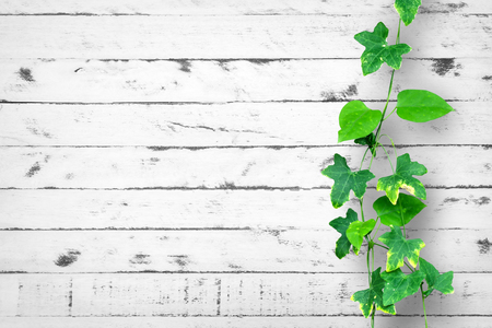 creeping plant: Creeping plant on wood wall as a background Stock Photo