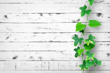 Creeping plant on wood wall as a background 版權商用圖片