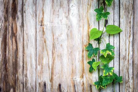 climber plant with wood plank Archivio Fotografico